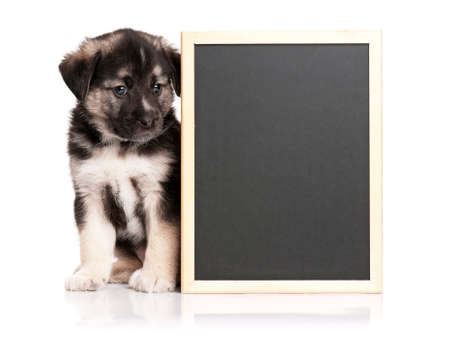 Cute puppy of 1,5 months old with a blackboard over white background Stock Photo