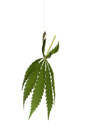 Fish hook with leaf of marijuana isolated on white background Stock Photo - 15541167