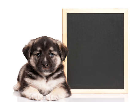 Cute puppy of 1,5 months old with a blackboard over white background Stock Photo - 15550355