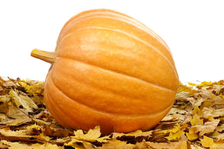 large pumpkin: Large pumpkin surrounded by leaves on a white background Stock Photo