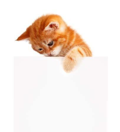 leeg bord: Schattige kleine rode katje met lege bord geïsoleerd op witte achtergrond