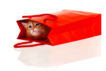 Cute little red kitten in a shopping bag isolated on white background Foto de archivo