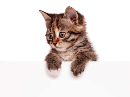 Portrait of cute little kitten with empty board on white background photo