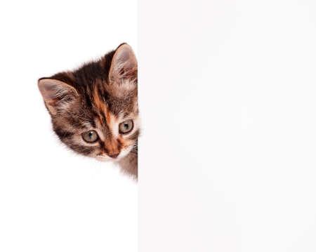 Portrait of cute little kitten with empty board on white background Stock Photo - 15935369
