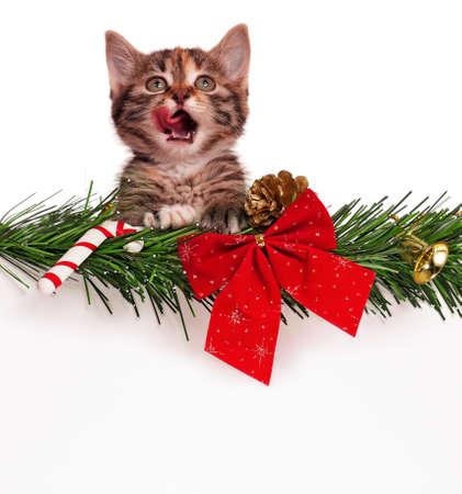 Portrait of cute christmas kitten with empty board on white background Archivio Fotografico