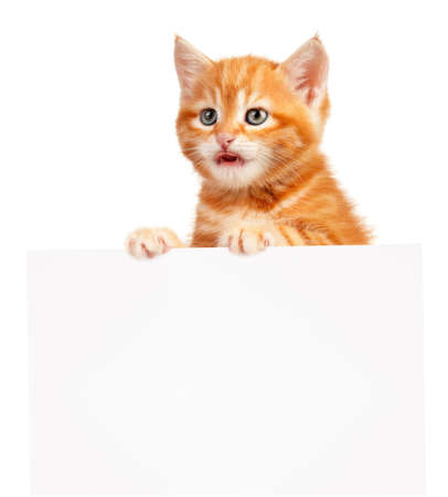 Cute little red kitten with empty board isolated on white background Stock Photo - 15935438