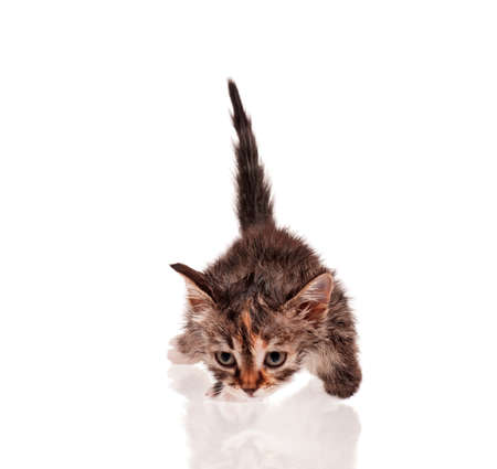 Wet little kitten isolated on white background Stock Photo - 15935197