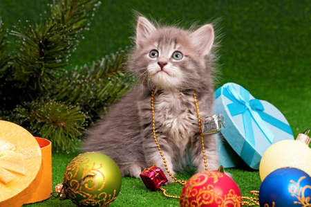 Cute gray kitten with Christmas fir tree on artificial green grass photo