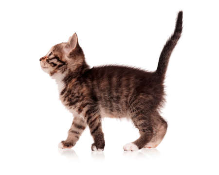 Cute little kitten isolated on white background photo
