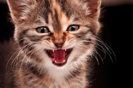 Portrait of cute little kitten on dark background photo