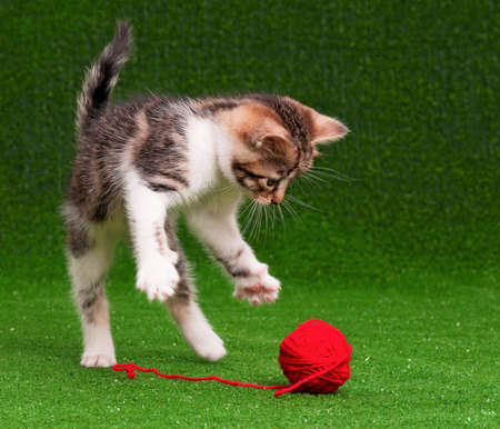 clew: Cute kitten playing red clew of thread on artificial green grass Stock Photo