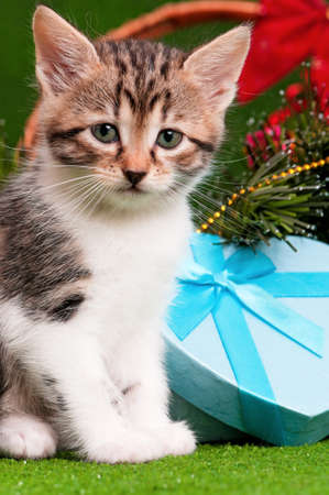 Cute kitten with Christmas gift box on artificial green grass photo