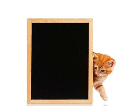 Cute little red kitten with a blackboard isolated on white background photo