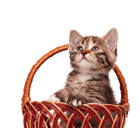 Cute little kitten in a wicker basket isolated on white background Stock Photo - 17579373