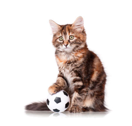 Cute kitten playing soccer ball, isolated on white background  photo