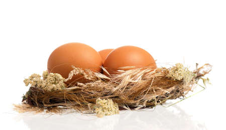 Fresh eggs in the nest, isolated on white background Stock Photo - 23436586