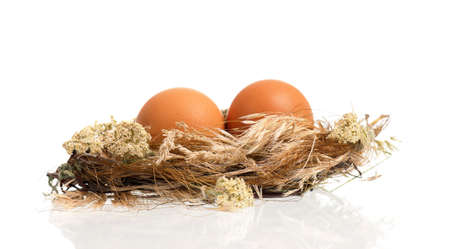Fresh eggs in the nest, isolated on white background photo
