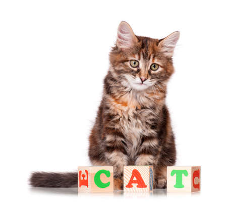 Kitten with wooden toy cubes with letters, isolated on white background photo