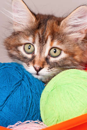 Close-up portrait of kitten with balls of threads photo
