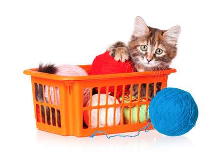 Kitten with balls of threads isolated on white background photo
