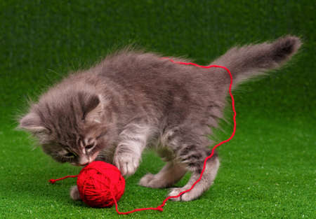 Cute baby kitten playing red clew of thread on artificial green grass photo