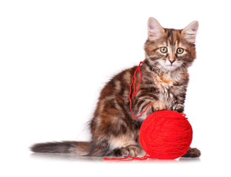 Cute kitten playing red clew of thread, isolated on white background  photo
