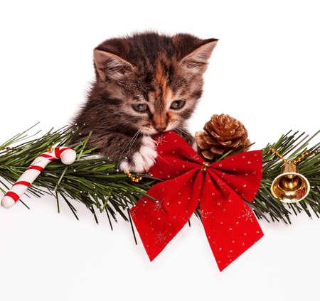 christmas pussy: Christmas kitten Stock Photo