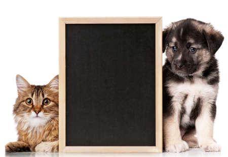 Pets with blackboard