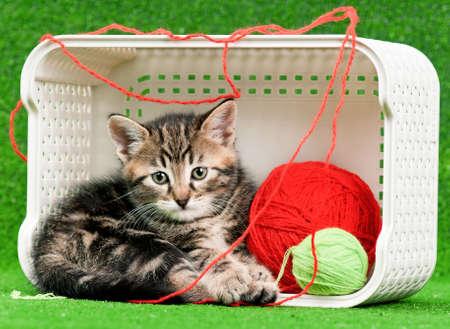 Cute kitten photo