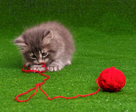かわいい子猫の人工の緑の草の上のスレッドの赤いクルーを再生