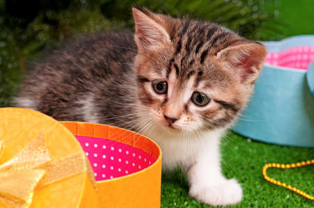 christmas pussy: Cute kitten with Christmas gift box on artificial green grass