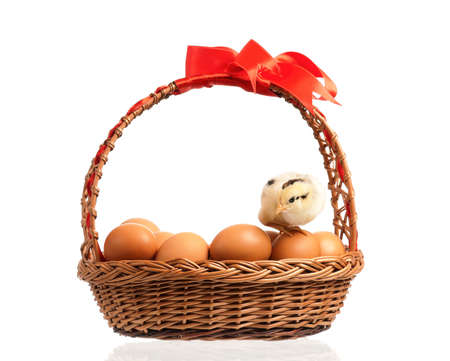 Cute little chicken on eggs inside basket, isolated on white background