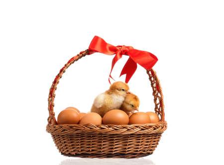 Nette kleine Hühner auf Eiern innerhalb des Korbes, lokalisiert auf weißem Hintergrund Standard-Bild - 74410467