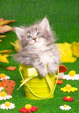 Cute gray kitten in bucket on artificial green grass
