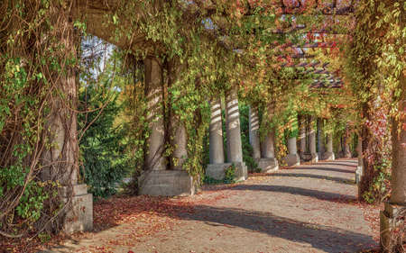 Pergola - concrete archway passage in the garden, surrounded by climbing plants. Wroclaw Poland in autumn. Beautiful tunnel walkway in park. Stock Photo
