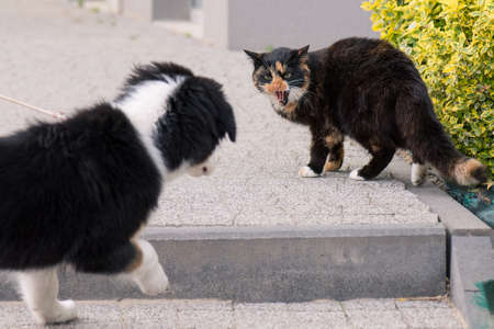 Adult famale cat and puppy Australian shepherd dog on the stairs outdoors.