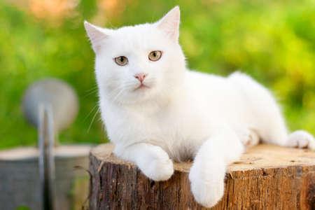 white cat in the garden photo