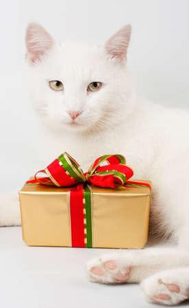 christmas cat gift background photo