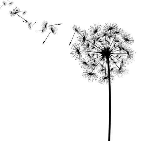 fluff: el diente de le�n con las semillas en el viento Foto de archivo