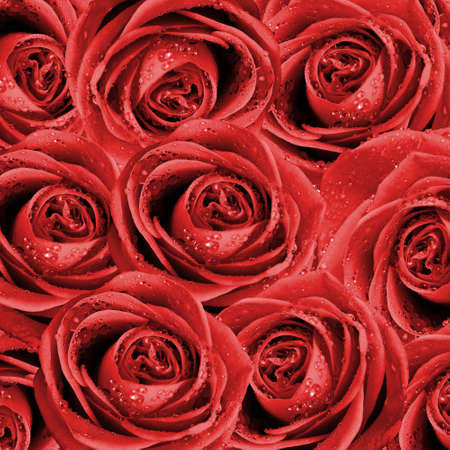 valentines background with roses photo