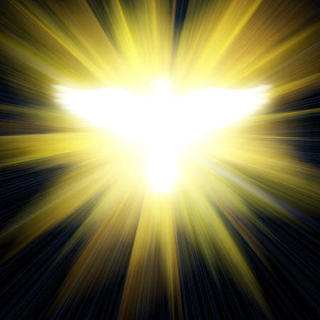 shining dove against golden rays photo