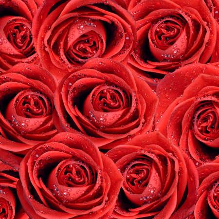 rosas rojas: de fondo de San Valentín con rosas