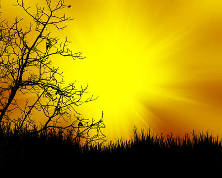plats: tree black on color sunset background Stock Photo