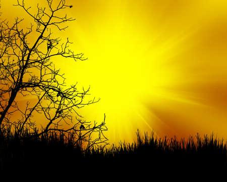plats: tree black on color sunset background Stock Photo