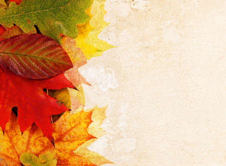 leaves on a grunge background photo