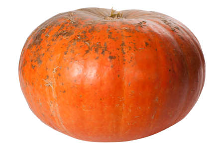 Single Pumpkin isolated on white background photo