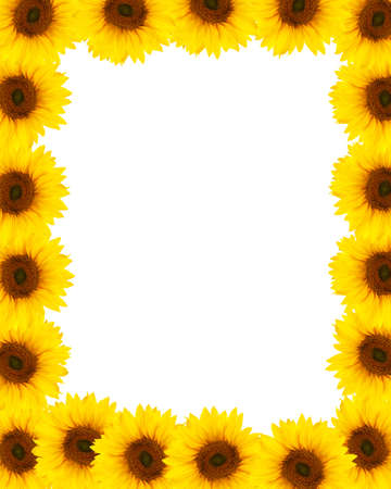 sunflower frame background photo