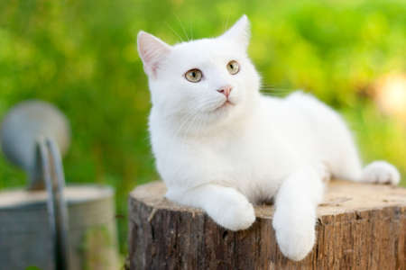 white cat in the garden photo