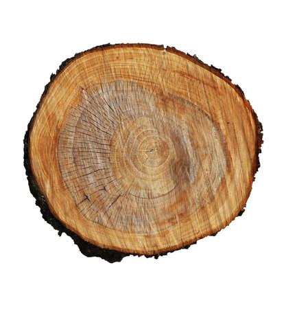 tronco de árbol sobre un fondo blanco