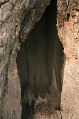 hollow tree: Hollow in tree Stock Photo